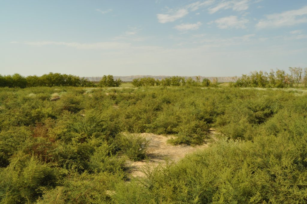 Karacamirli site